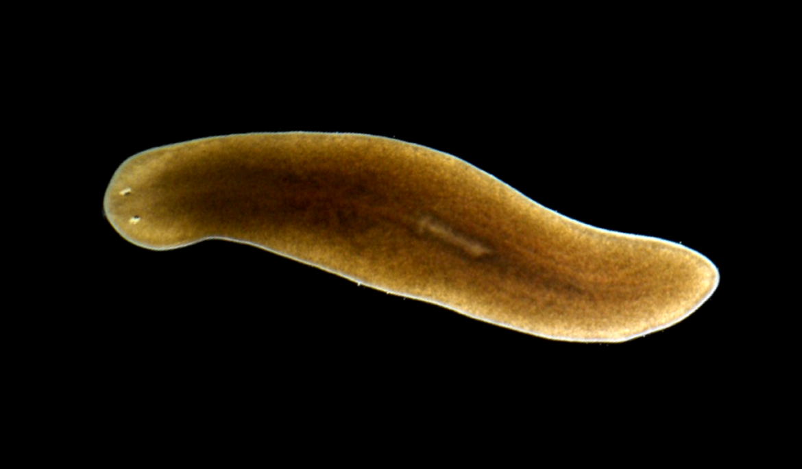 these flatworms spent five weeks in space what happened is truly